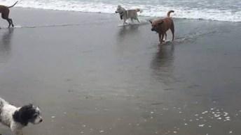 Homem E Seus Cachorros Na Praia, Veja Quantos Cachorros Ele Tem!
