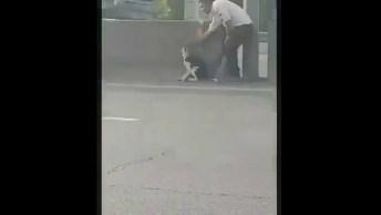 Homem Se Arrisca Para Salvar A Vida De Um Cachorro, Impressionante!