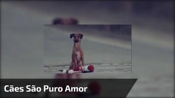 Homenagem Para Cachorro Com Música Quatro Patas De Amor Marcus Eni!