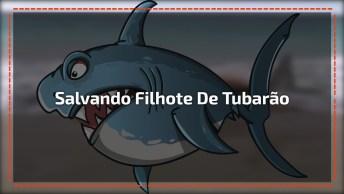 Homens Salvam Ilhote De Tubarão De Gancho Na Boca, Muito Legal A Atitude!