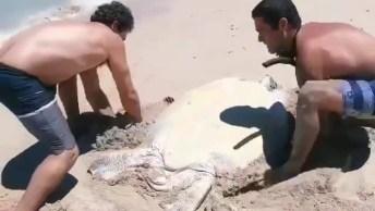 Homens Salvam Tartaruga Marinha Que Estava Virada De Cabeça Para Baixo Na Areia!