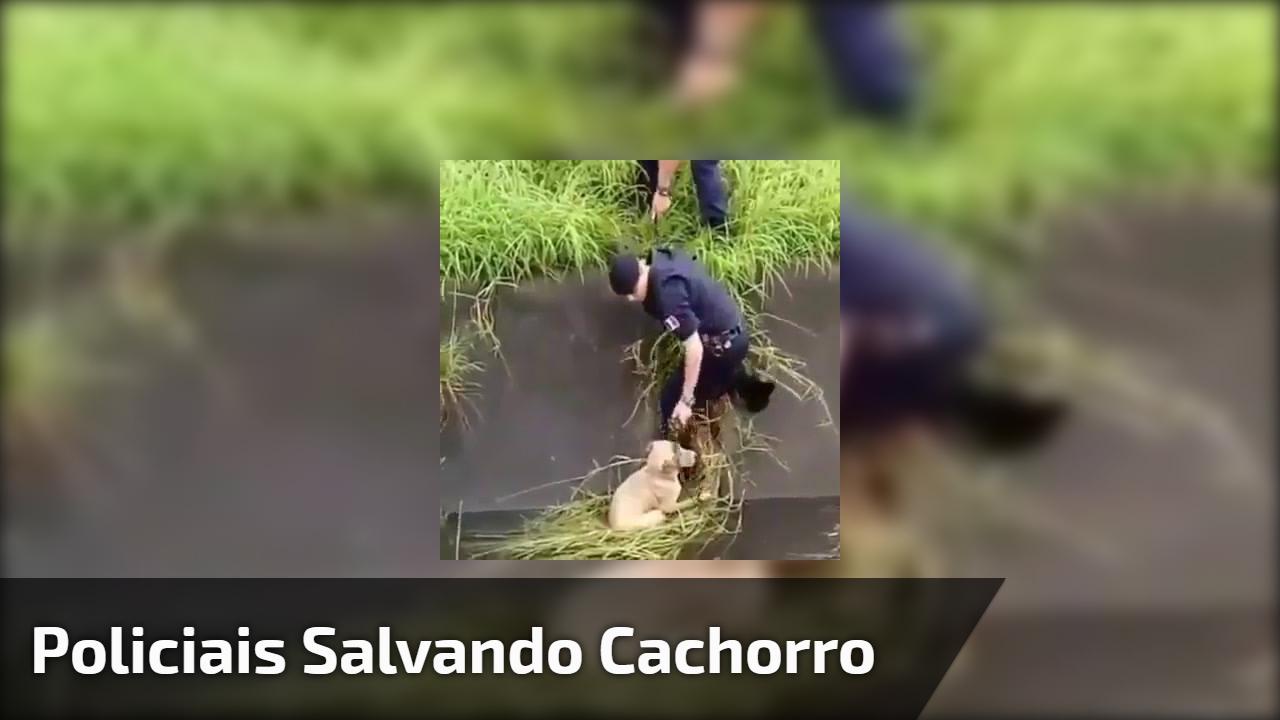 Policiais salvando cachorro