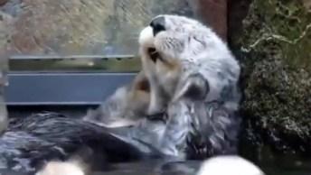 Hora De Tomar Banho, Esses Animais Vão Te Surpreender, Confira!