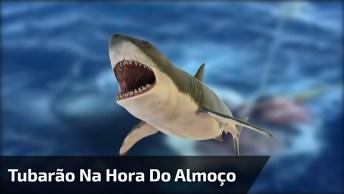 Hora Do Almoço De Um Tubarão, Que Cena Arrepiante, Confira!
