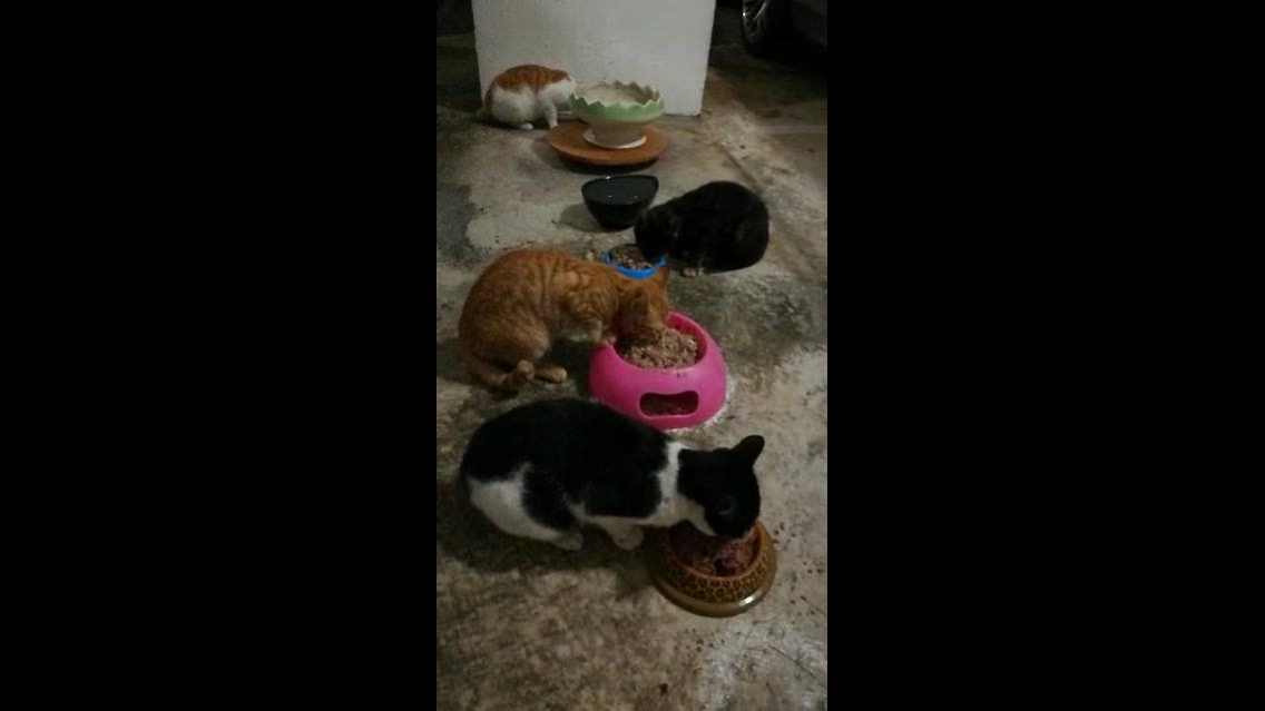 Hora do almoço dos gatos