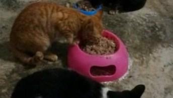 Hora Do Almoço Dos Gatos, Veja Como Cada Um Fica Na Sua Vasilha!