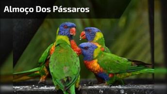Hora Do Almoço Dos Pássaros, Confira Como Eles Se Reúnem Rápido!