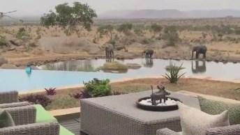 Hotel Na Tanzânia, Onde Você Pode Ver Elefantes, Zebras E Outros Animais!