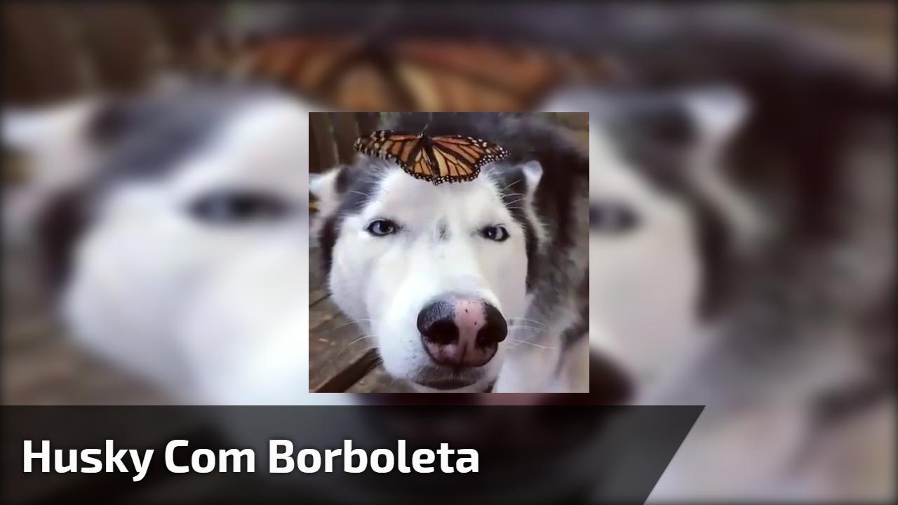 Husky com borboleta