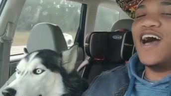 Husky Siberiano Cantando Com Seu Dono, Olha Só Que Coisinha Mais Fofa!