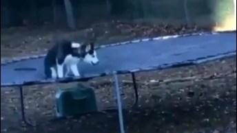 Husky Siberiano Disfarça Quando Vê Alguém Olhando Pra Ele!