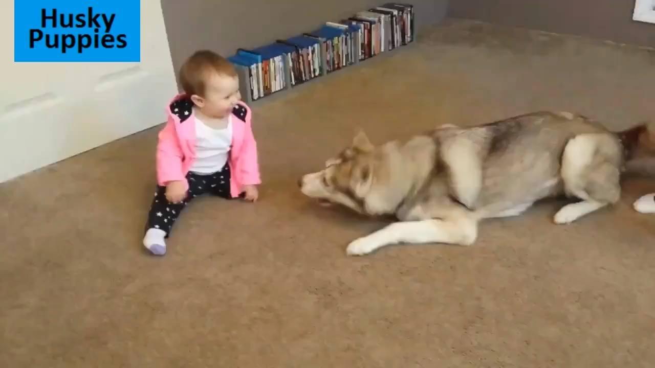 Husky siberiano e crianças, o vídeo mais fofo que você vai ver hoje!!!