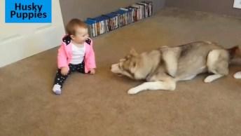 Husky Siberiano E Crianças, O Vídeo Mais Fofo Que Você Vai Ver Hoje!