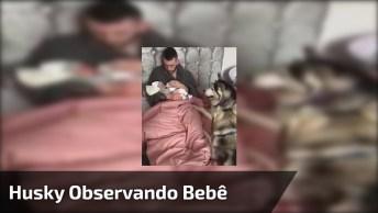 Husky Siberiano Vendo Seu Dono Dando Mamadeira Para Bebê!