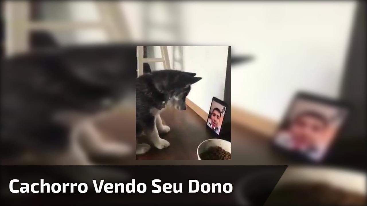 Cachorro vendo seu dono