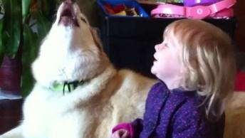 Husky Siberianos Como São Inteligentes, Olha Só As Coisa Que Eles Fazem!