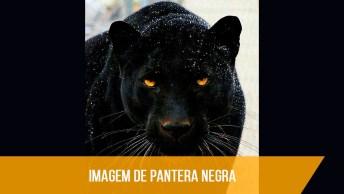 Imagem De Pantera Negra, Simplesmente As Imagens Mais Lindas Registradas!