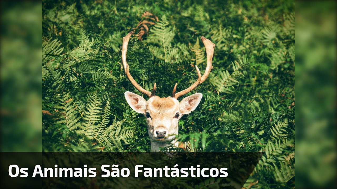 Imagens da natureza, os animais são fantásticos, confira!