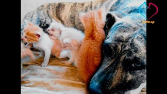Imagens De Animais Provando Que Para Ser Mão Não Precisa De Laços De Sangue!