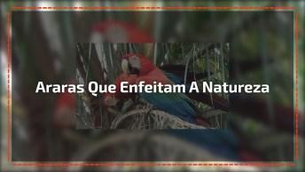 Imagens De Araras Mais Lindas, Elas Enfeitam Ainda Mais A Natureza!