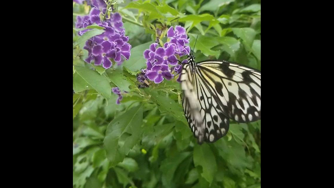 Imagens de borboleta para compartilhar no Facebook