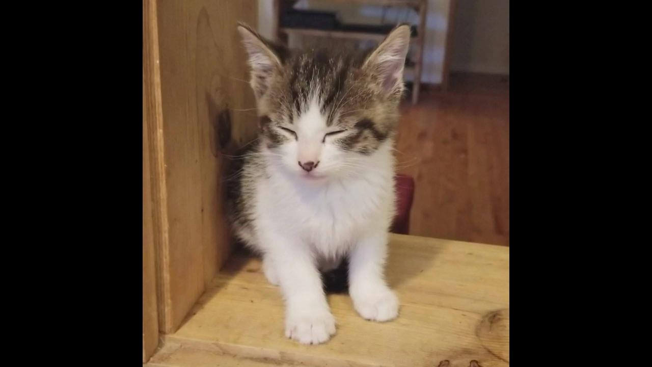 Imagens de filhotes de gatos mais fofos do mundo