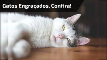 Imagens De Gatos Que Parecem Estar Bêbados, Que Engraçados Hahaha!