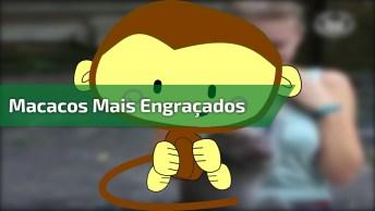 Imagens De Macacos Mais Engraçados Do Mundo, Para Rir E Compartilhar!