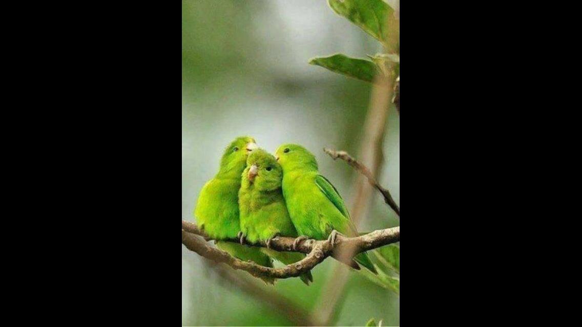 Imagens de passarinhos diferentes e bonitos