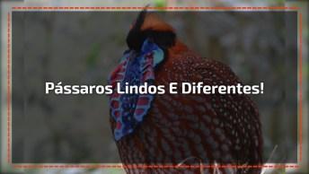 Imagens De Pássaros Mais Lindos Da Natureza, Um Mais Bonito Que O Outro!