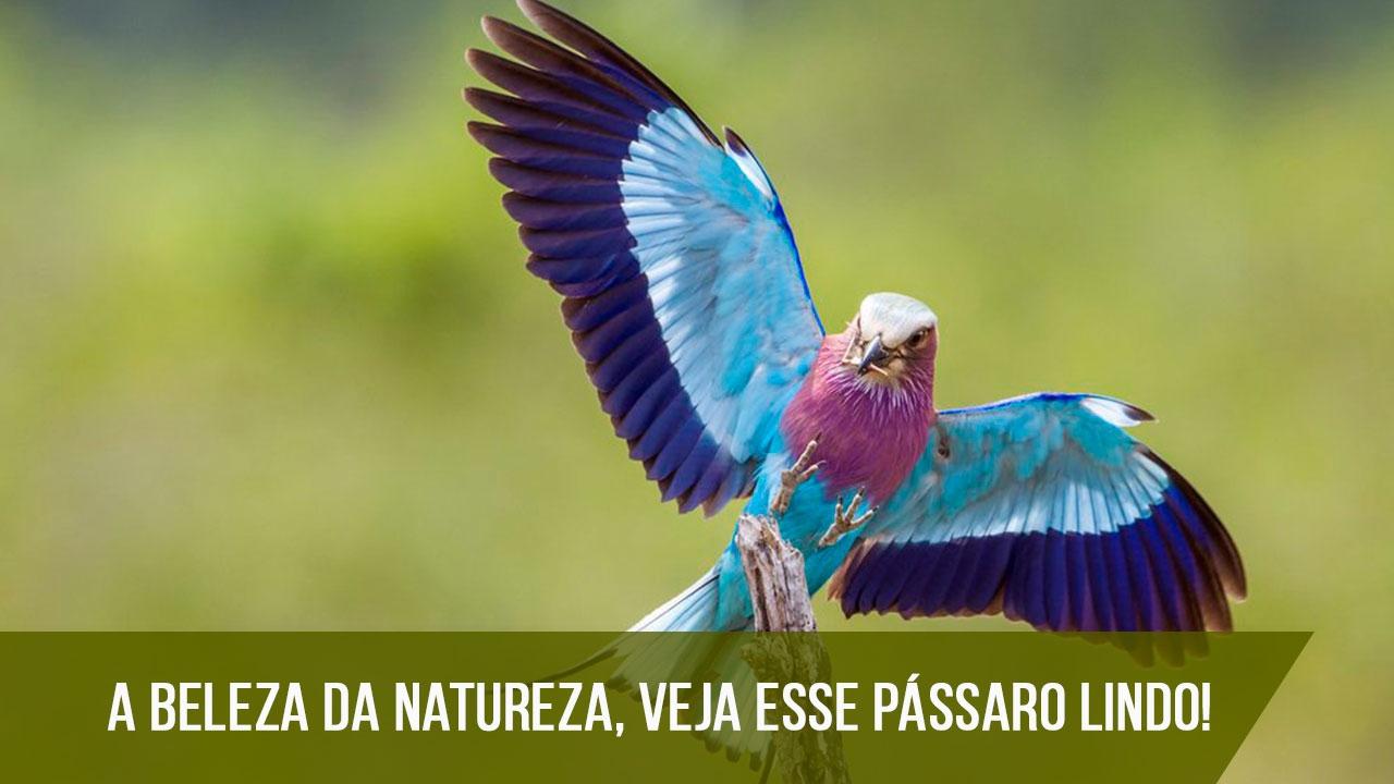 Imagens dos pássaros mais lindos que já viu