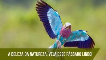 Imagens Dos Pássaros Mais Lindos Que Já Viu, Compartilhe!