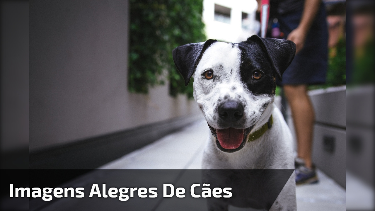 Imagens alegres de cães