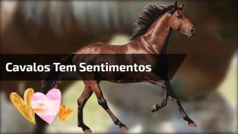 Imagens Que Provam Que Os Cavalos Tem Sentimentos, Por Isso Não Maltrate-Os!