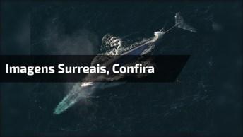 Imagens Surreais, Dai Você Esta De Boa Remando E Da De Cara Com Baleias!