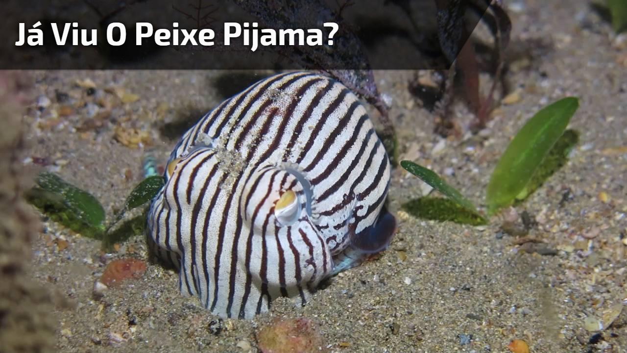 Já viu o peixe pijama? Veja o video e descubra como ele é!