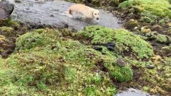 Labrador Retriever Se Divertindo Na Água, Como A Natureza É Fantástica!