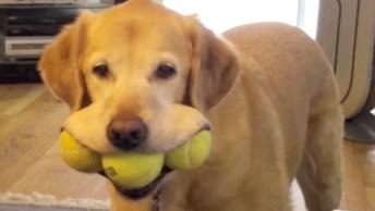 Labradores Os Amiguinhos Mais Engraçados Que Existem, Tente Não Rir!