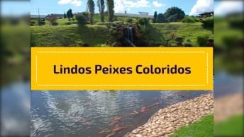 Lago Cheio De Peixes Coloridos, Um Lugar Lindo Para Relaxar!