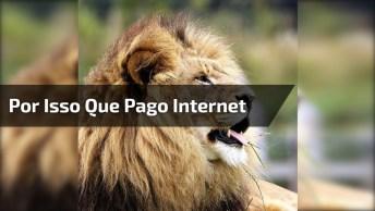 Leão Cantando, Hahaha! É Por Isso Que Pago Internet, Tente Não Rir!