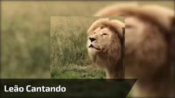 Leão 'Cantando', Mais Uma Montagem Que Faz A Gente Dar Risadas Hahaha!