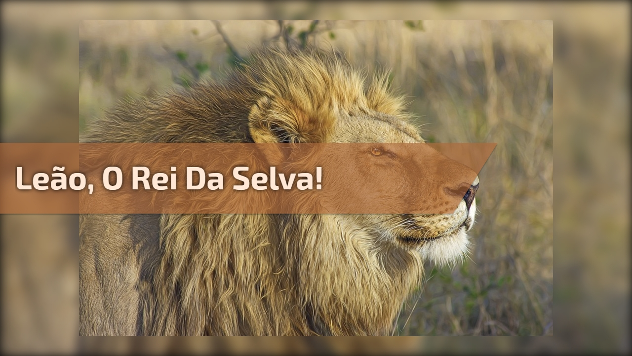 Leão, o rei da selva!