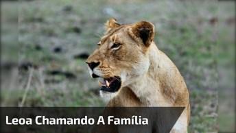 Leoa Chama Por Família Por Quase Três Dias, Veja Que Vídeo Emocionante!