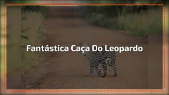 Leopardo Sai A Caça E As Cenas São Surpreendentes, Confira!