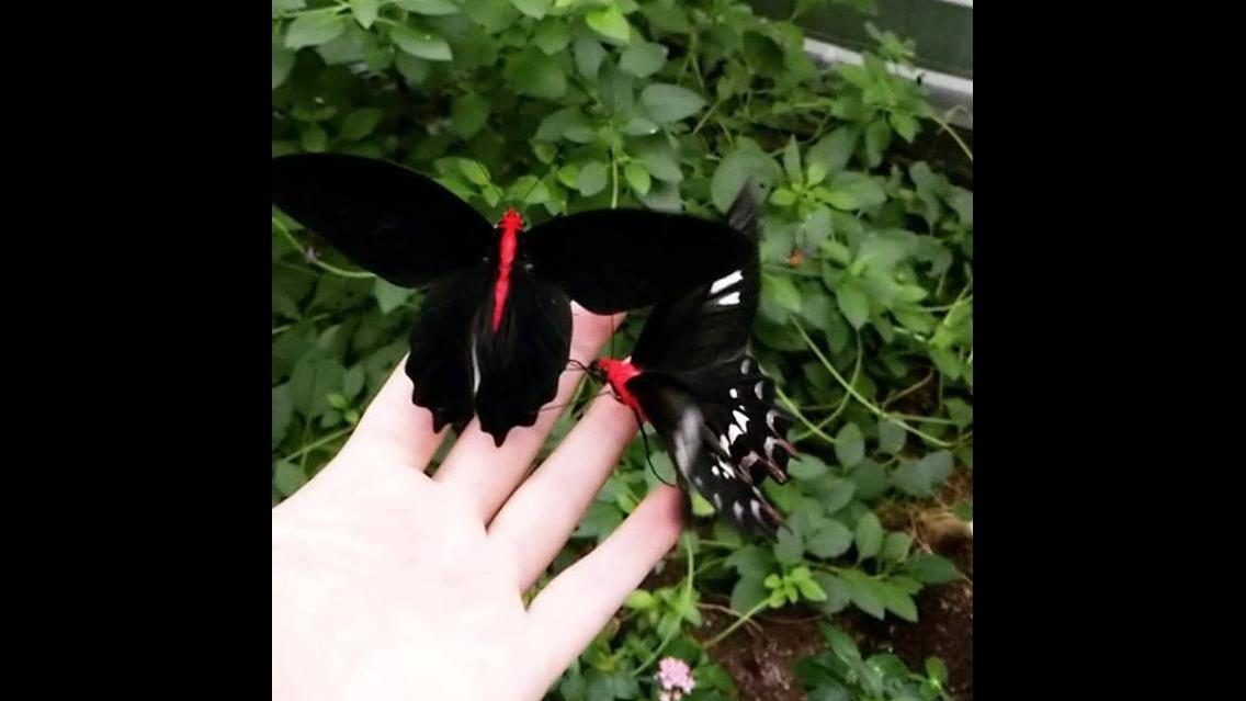 Linda borboleta na mão humana
