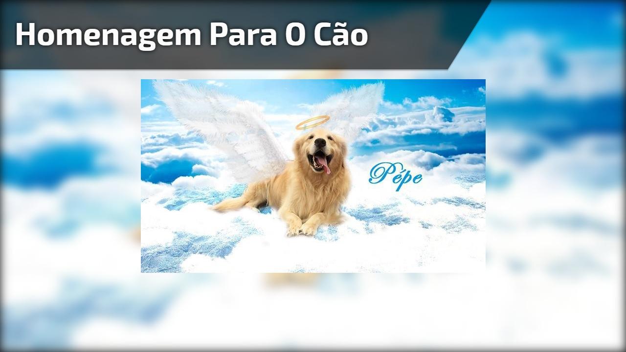 Homenagem para o Cão