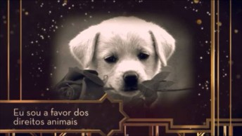 Linda Mensagem Para Todos Que Amam Os Animais! Respeitem Os Animais!