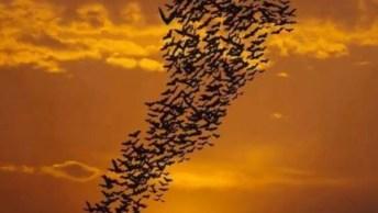 Lindas Fotos De Colonias De Morcegos, O Mundo Animal É Incrível!