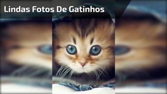 Lindas Fotos De Gatinhos, Um Mais Fofo Que O Outro, Vale Apena Conferir!