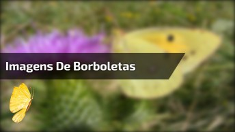 Lindas Imagens De Borboletas, A Natureza É Perfeita, Confira!
